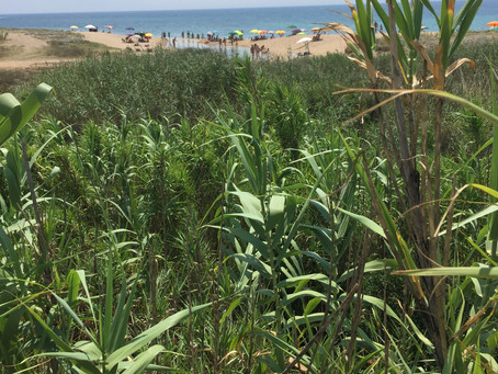 Süßwasser trifft Salz - Fiume Borraco