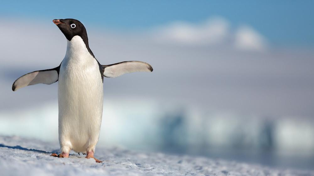 Penguins film review
