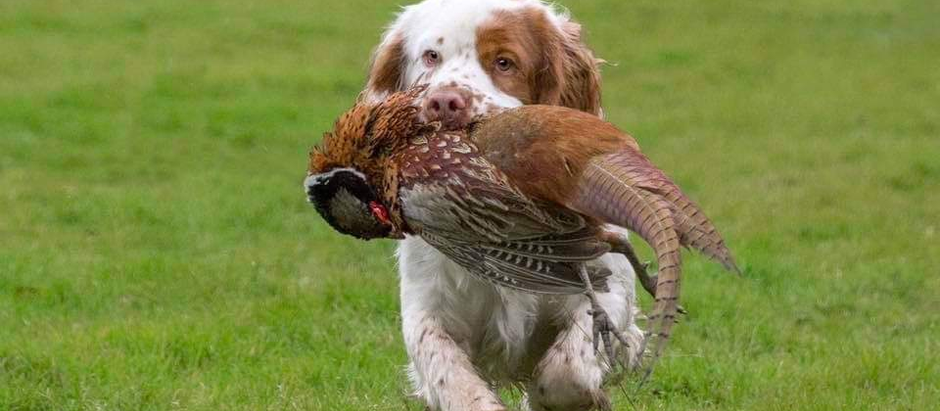 Deadline for the 11th of November Field Trial is the 1st