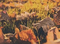 Herbst – Coiffeur des Jahres
