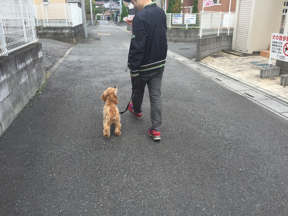 ヒールウォーク(埼玉県川口市)