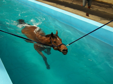 Benefits of Hydrotherapy for Horses