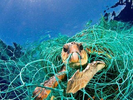 ¿Por qué la lucha contra el plástico?