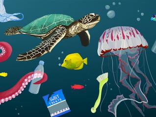 Impact of Plastic in the Ocean Environment