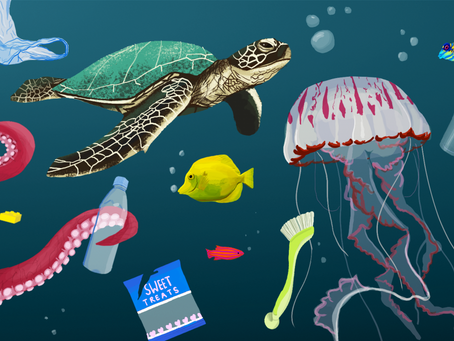 Impact of Plastic in the Ocean Environment