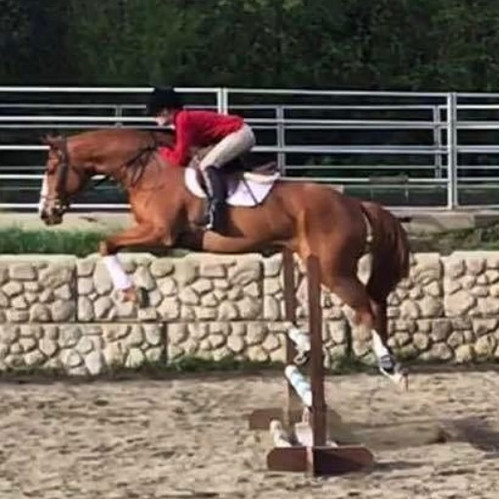 July, 2017 #600OTTBs Winner