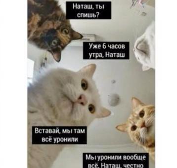 Мемы и не только: по следам мастер-класса Hermiona с Ксенией Турковой