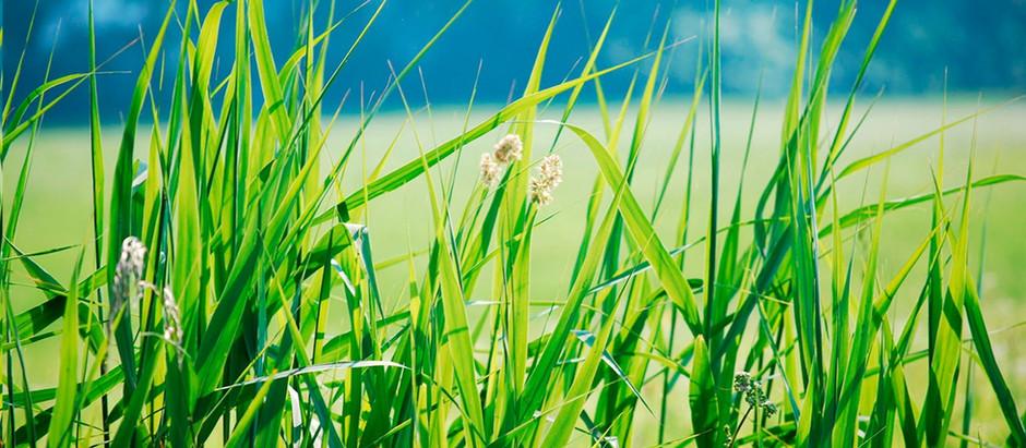 Bei der Simplex hört man das Gras wachsen!