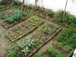 Huertos y granjas familiares parte del Plan Emergente