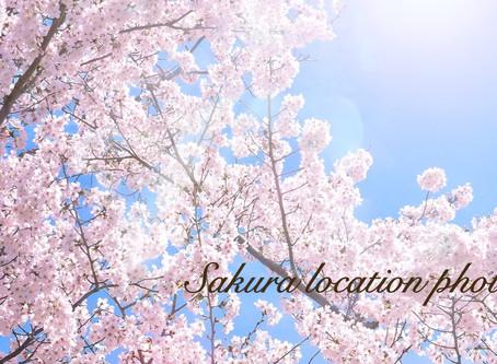 【まだ間に合います🌸】桜ロケーションフォト