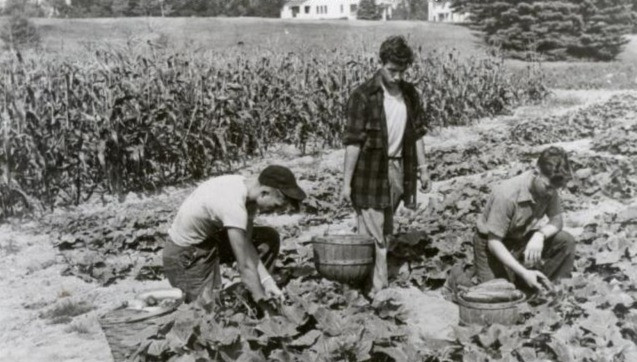 Harvesting the Good Will-Hinckley farm