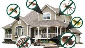 Importância da dedetização em sua casa