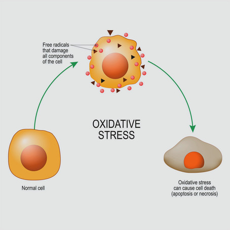 Why Oxidative Stress is Bad for the Human Body