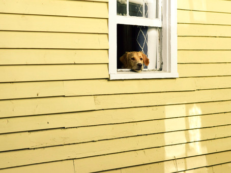 Should You Allow Pets in Your Property?