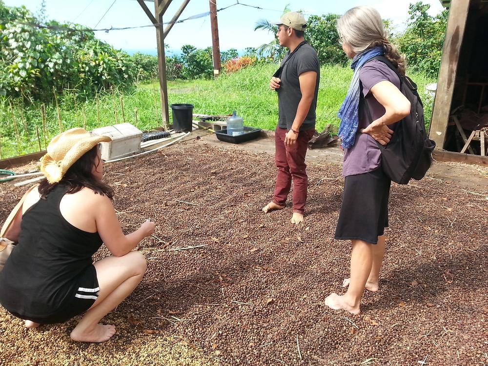 Coffee plantation tour Kona, Big Island