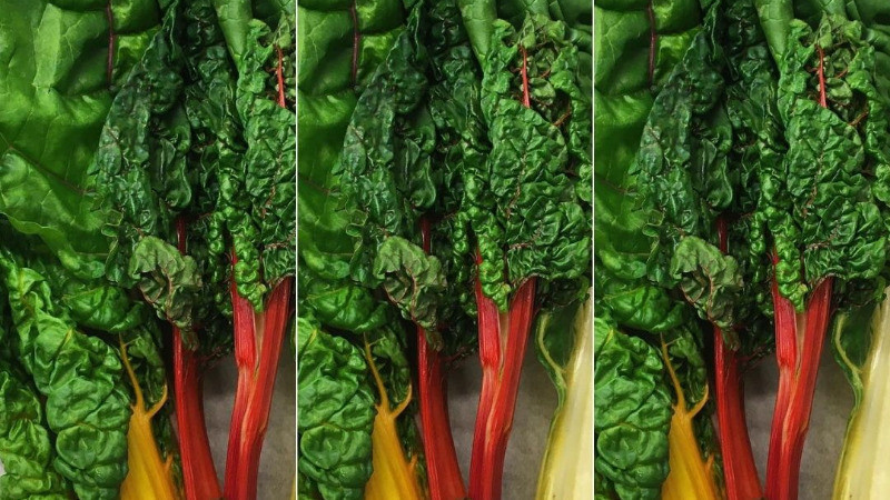 rainbow chard delicious greens
