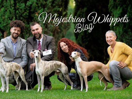 Welcome to Majestrian Whippets Blog
