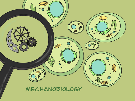 MechanoBiology: An Emerging Field of Biomedical Research
