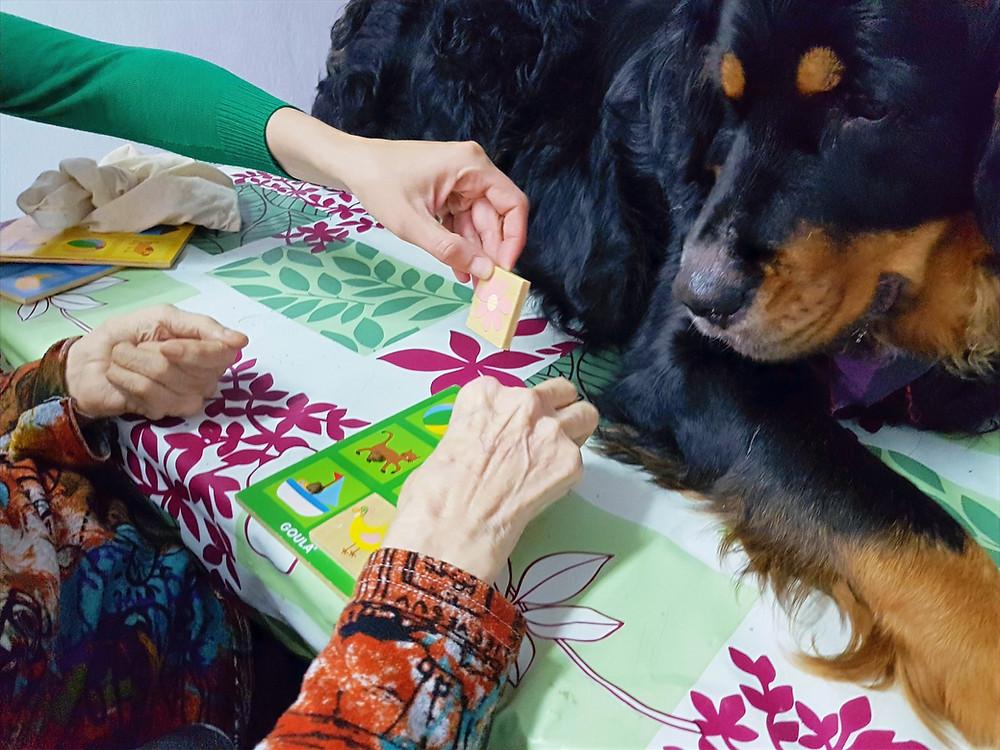 Terapia Asistida con Perros en la Tercera Edad