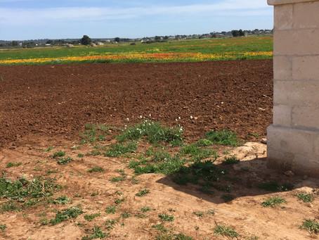 "Rotbraune Erde - la terra del vino ""Primitivo"""