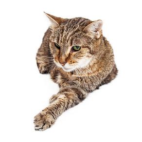 Dietary Needs for Senior Cats