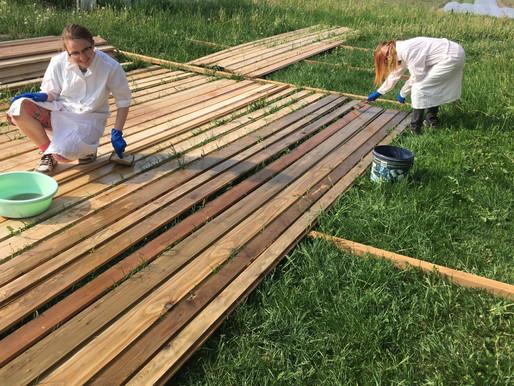 Žaibiška medienos transformacija. Nauja ↠ Sena.