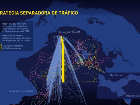 Commerical shipping lanes moved in Panama to save humpback whales