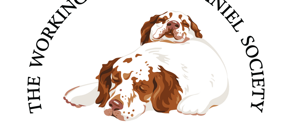 Joint Statement from The Clumber Spaniel Club and The Working Clumber Spaniel Society
