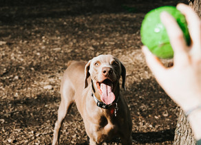 Small guide for a safe return to dog parks!