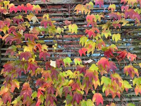 Der Herbst, der Herbst ist da!