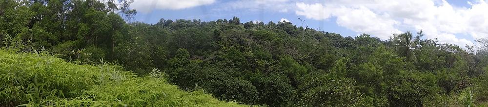plante arborescente sentier randonnée de la cascade tambour