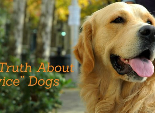 "The Truth About ""Service Dogs"""