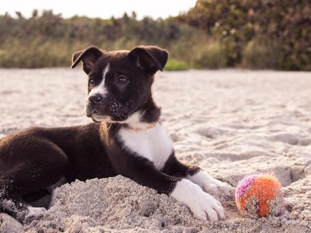 กฎ 10 ข้อในการดูแลสุนัขของคุณ
