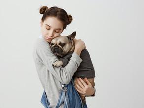 Como Cuidar dos Pontos da Cirurgia do Cachorro ou Gato
