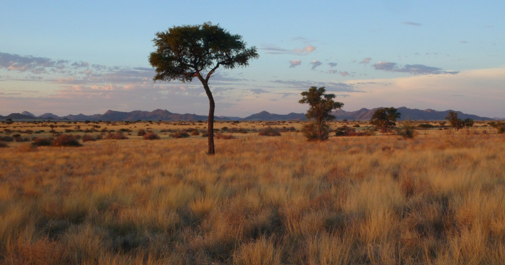 gecko camp solitaire namibie
