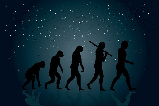 Prime Evolution: Path of Intelligent Life