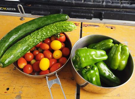 【空の旅・四万十川】野菜が集まってきたぞい!