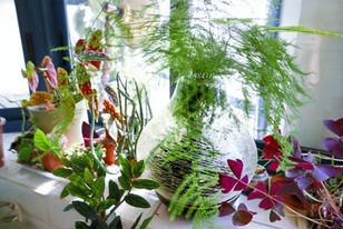 לחות בעונה היבשה: מה שטוב לנו טוב לצמחים