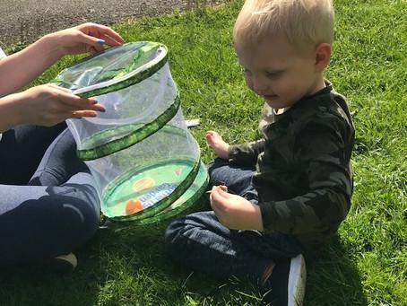Exploring life cycles. Jack Nursery
