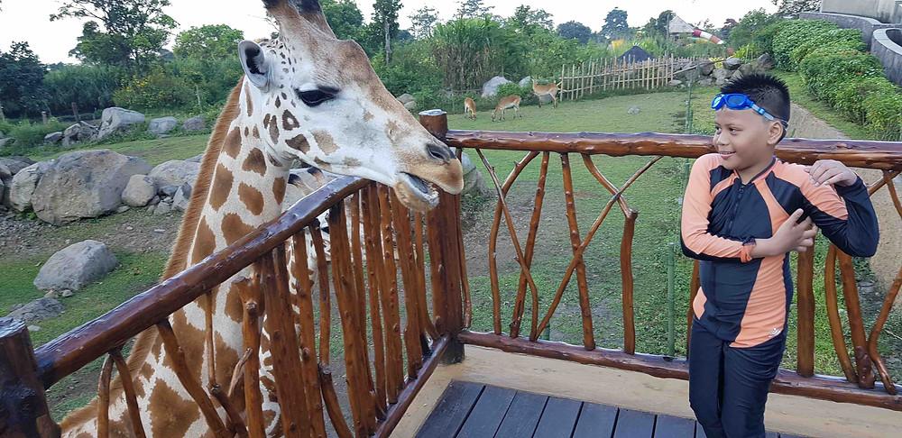 baobab safari resort