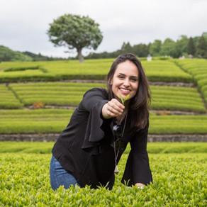 Experimentando chás em Tóquio: do clássico aos drinques