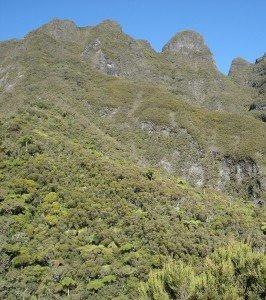 La Réunion : une île d'exception, riche par sa flore, inscrite au Patrimoine de l'Humanité