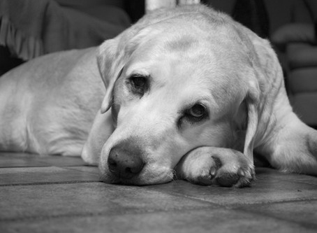 How to combat your dog's Separation Anxiety.