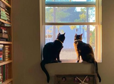 Kitties, Kitties, Kitties 💓