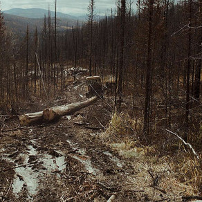 The Aftermath of Wildfires
