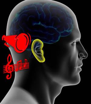 El oído y el cerebro