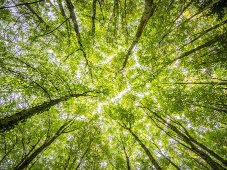 How we at Higson are reducing our environmental impact