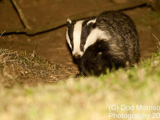 Labour announces a new animal welfare plan...