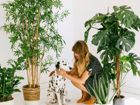 Common Houseplants That are Toxic for Dogs