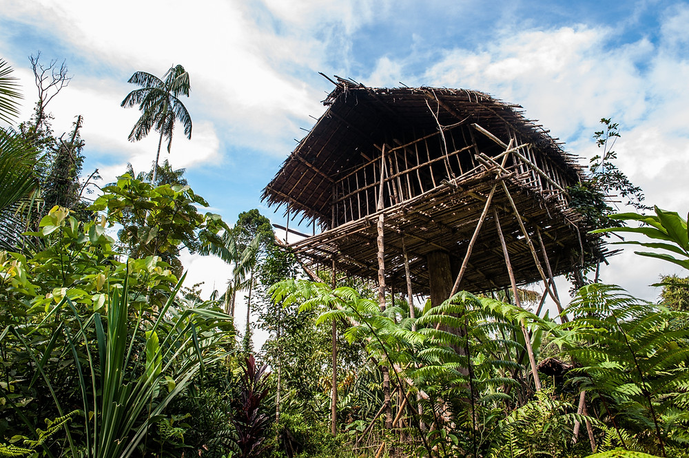 Korowai Papouasie Indonésie Iran Jaya Architecture Peuple Civilisation Autochtone Cabane Forêt